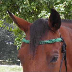 http://www.selleriestpierre.com/116-377-thickbox/braided-rope-browband-cobra.jpg