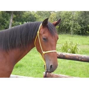 http://www.selleriestpierre.com/25-252-thickbox/licol-en-corde.jpg