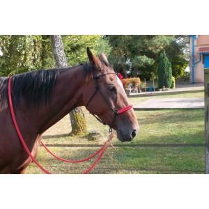 http://www.selleriestpierre.com/87-360-thickbox/bride-en-corde-sans-mors.jpg