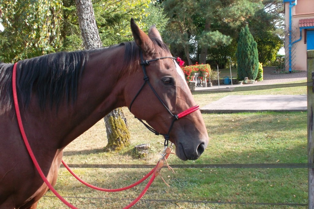 Bitless Rope Bridle